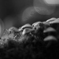 Magic Mushrooms Put the Brain in Dream Mode and Facilitate Higher Thinking