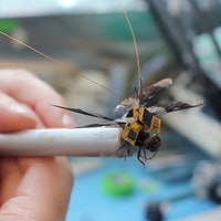 Scientists Have Created a Controllable Cyborg Dragonfly
