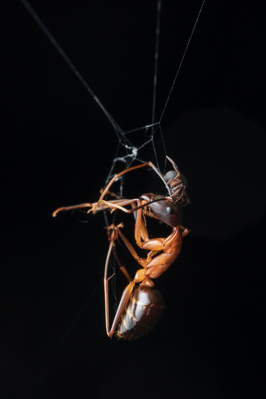 small spider found in Malaysia