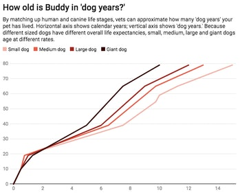 How old is Buddy in dog years?