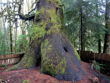 Harris Creek Spruce Vancouver Island Pacific Marine Route