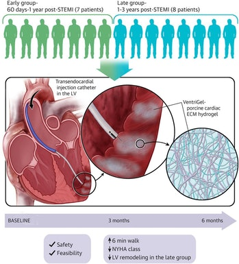 graphic abstract for pig cardiac cell therapy