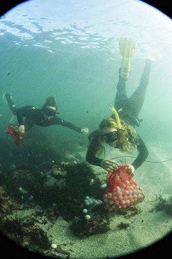 Alex Weber and Jack Johnston collecting golf balls from the sea floor.