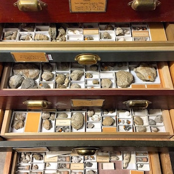 Researchers must travel to visit non-digitized specimens in person, not knowing what they will find – if they're even aware of their existence.