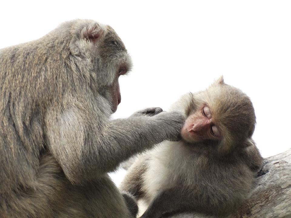 genetics aging evolution