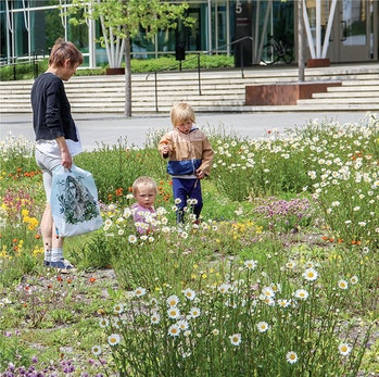 An alternative grass-free (tapestry) lawn boasts native plants in the Ultuna Campus of the Swedish University of Agricultural Sciences, Uppsala, Sweden.