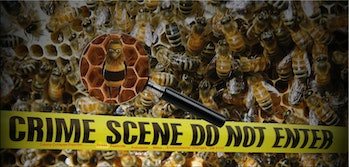 Bees >>> Colony Collapse Disorder