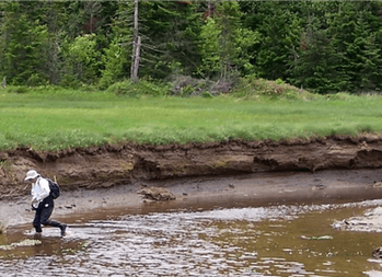 Ten feet (3 meters) of carbon-rich soil accumulation along Dipper Harbour, Bay of Fundy, New Brunswi...