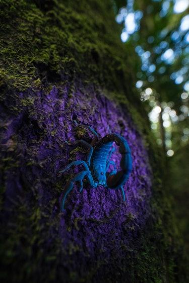 small scorpion in Madagascar