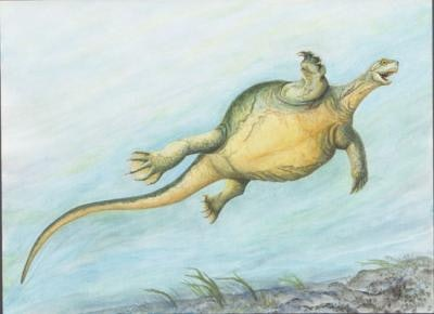 Illustration showing whatEorhynchochelyswould have looked like in life, which is to say very pleased with itself.