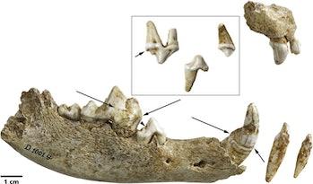 ancient dog teeth