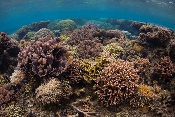 This thriving reef in a marine protected area (MPA) had thriving populations of fish munching the algae off the reef.
