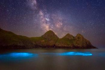 Walesbioluminescentplankton