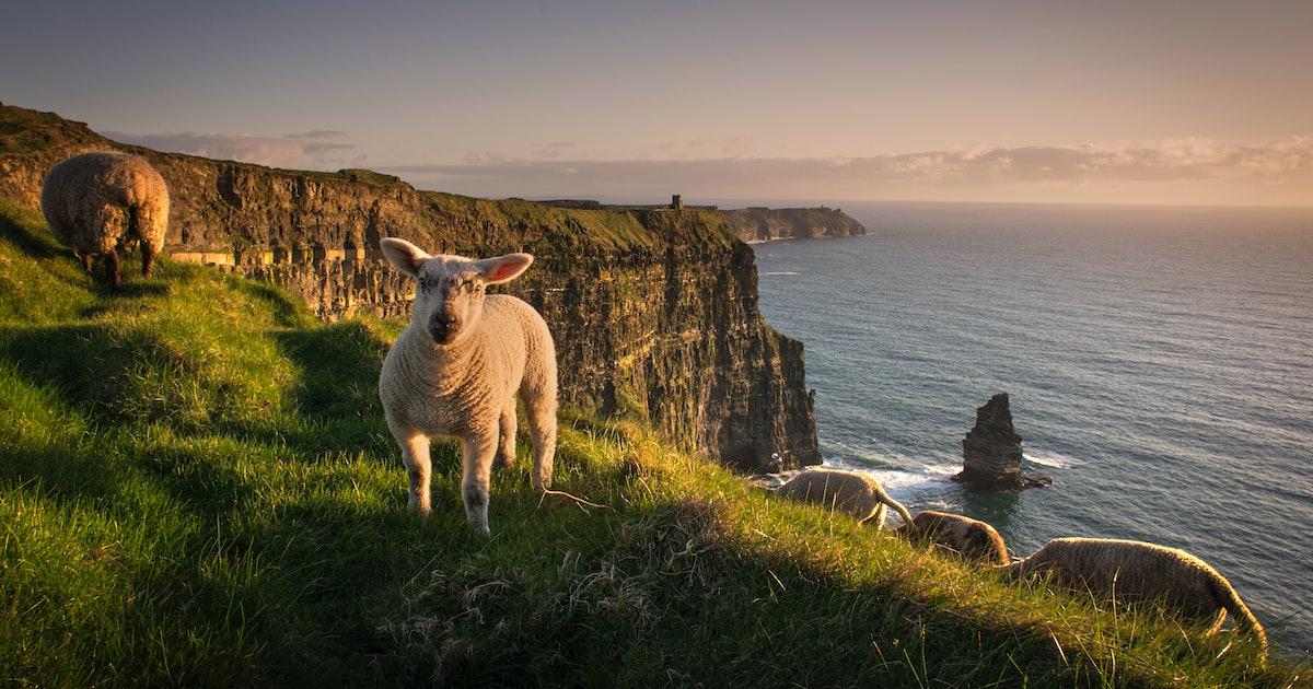 An Irish folk medicine can stop antibiotic resistant bacteria