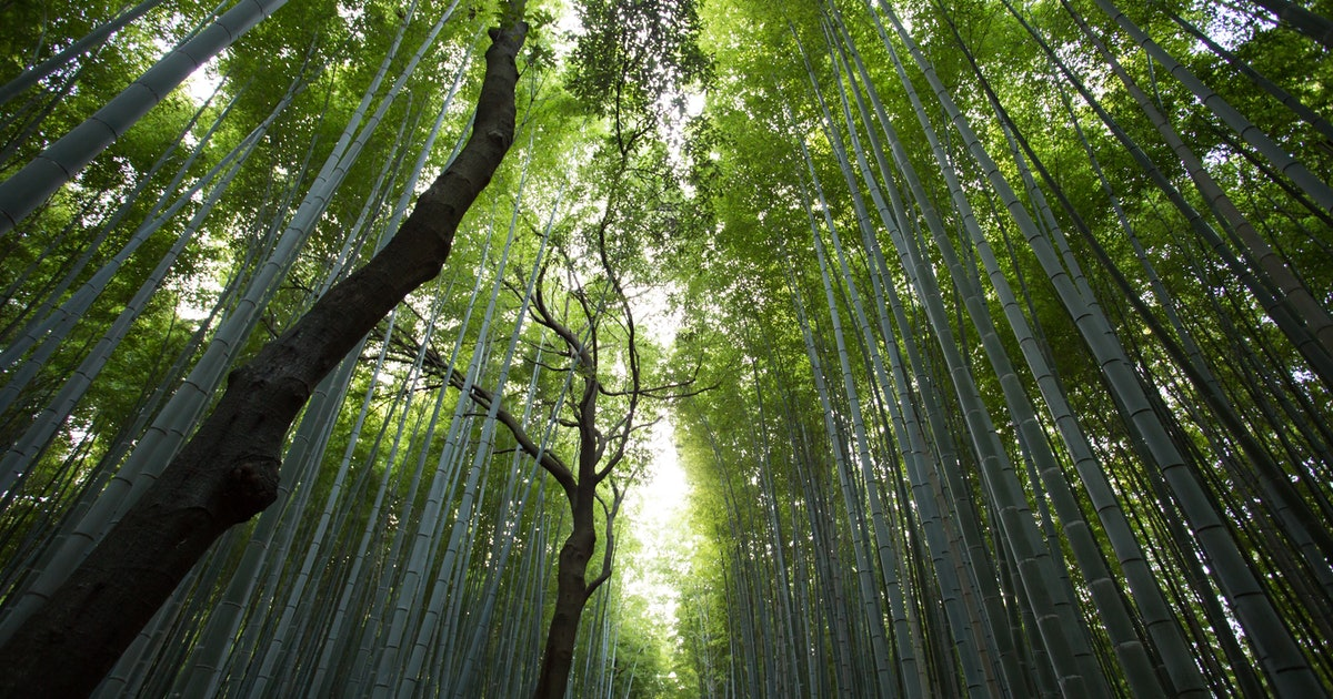 Genetically Modified Trees Could Save Us From Global Warming
