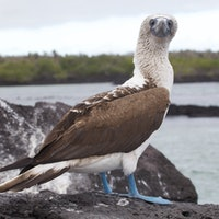 Celebrate Darwin Day with 10 Incredible Creatures from the Galapagos