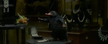 A Niffler in 'Fantastic Beasts and Where to Find Them'