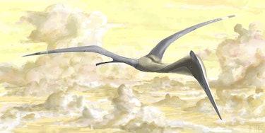 Quetzalcoatlus azhdarchid pterosaur flying