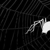 Climate change is making a social spider more aggressive