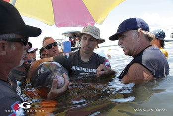 Members of the Health and Environment Risk Assessment (HERA) project examine a dolphin.