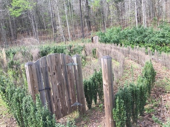 Internet users have been searching for a way to save John B. McLemore's hedge maze from the S-Town p...
