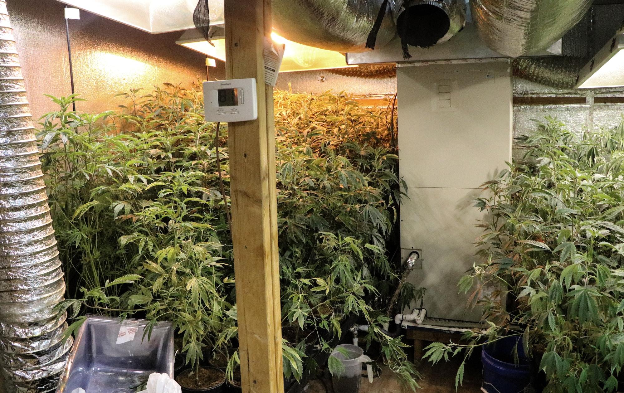 Bortac breach a marijuana grow house