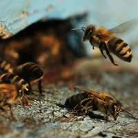 Bees Understand the Abstract Math Concept of Zero, New Study Shows