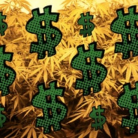 Want to Make Money? Learn Controlled-Environment Cannabis Cultivation