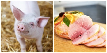 piglet and ham