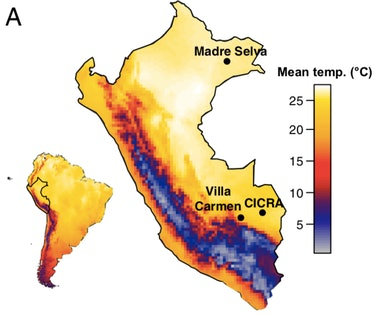 Bd normally thrives between 17 and 25 degrees Celsius (63 and 77 degrees Fahrenheit), but the Peruvian Amazon reached temperatures over 38°C (100°F) on nine different days during the study period.