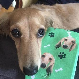 lovimals: Personalized Animal Face Socks