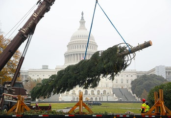 Christmas tree, workers, capitol