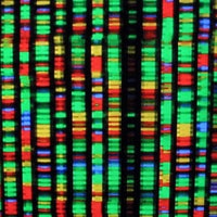 CRISPR's Potential to Curate DNA Will Radically Alter Human Evolution