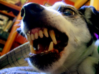 fear aggression dogs