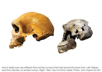 Homo naledi, homo sapien
