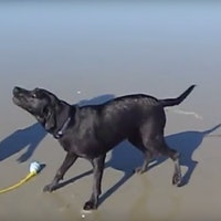 The Viral Video of Dog Squirting Butt Water, Explained by Science
