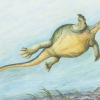 Ancient Fossil of Turtle Without a Shell Found in China Solves Old Debate