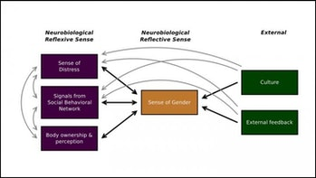 This is a diagram of the multisense theory of gender dysphoria.
