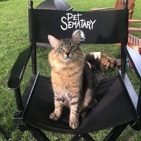 'Pet Sematary': Here's How They Wrangled 4 Cats to Play Church
