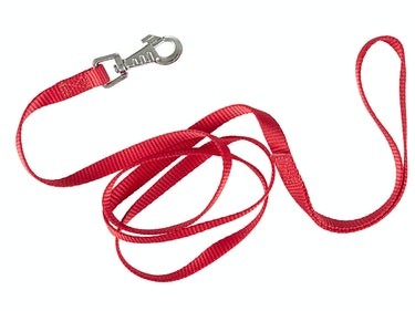red dog leash