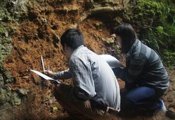 sediment samples