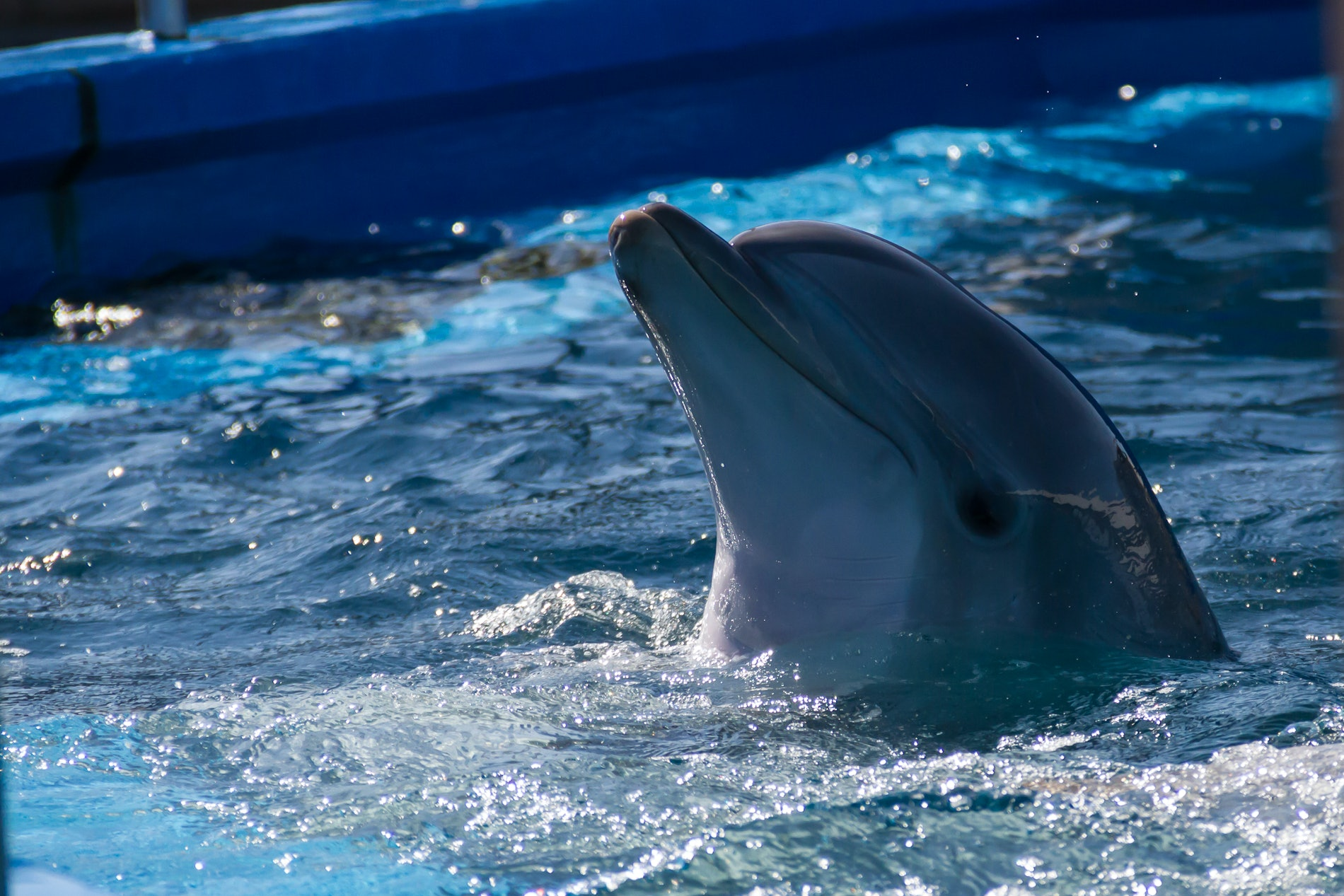 young rescued Dolphin at Sea World 2011