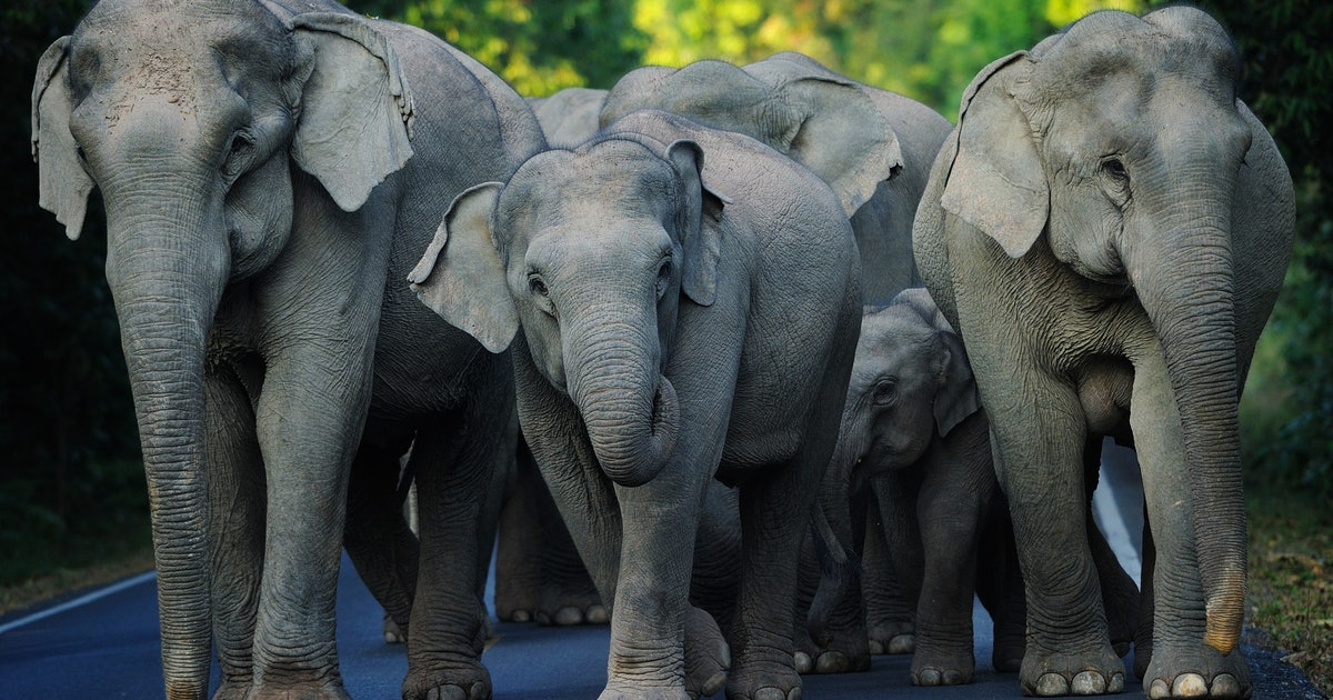 Asian Elephant Reveals Innate Math and Counting Skills in New Study