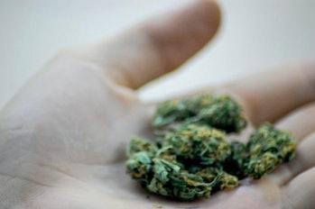 marijuana pot cannabis weed chocolate placebo effect 420 4/20
