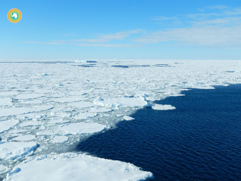 robots climate change Hannahs postdocs carbon sinks