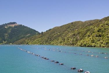 A New Zealand Green Lipped Mussel Farm near Havelock, South Island, New Zealand