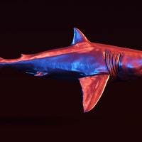 Great white sharks are most afraid of this liver-eating marine predator