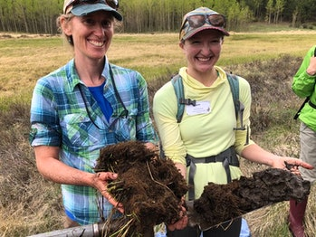 Wetland soil core taken from Todd Gulch Fen at 10,000 feet in the Colorado Rockies. The dark, carbon-rich core is about 3 feet long. Living plants at its top provide thermal insulation, keeping the soil cold enough that decomposition by microbes is very slow.