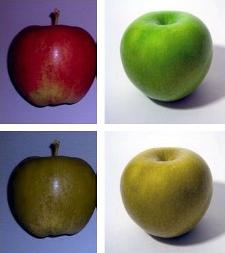 apples different colors