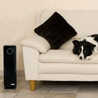 The Air Purifiers That You Never Knew You Needed..Until Now